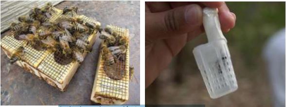 Jaula de madera y plástica para abejas reinas