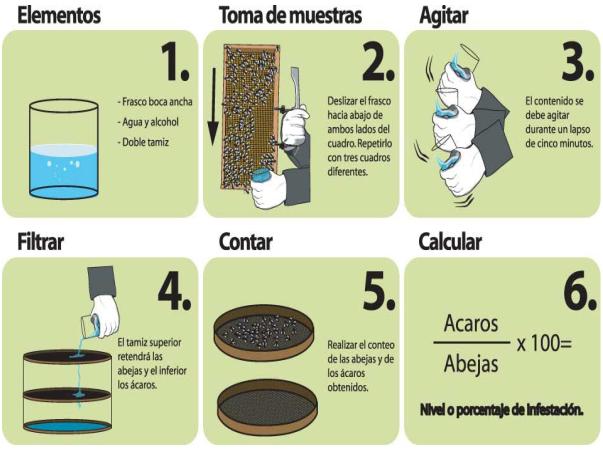 DeMielesyAbejas - Control de la Varroasis