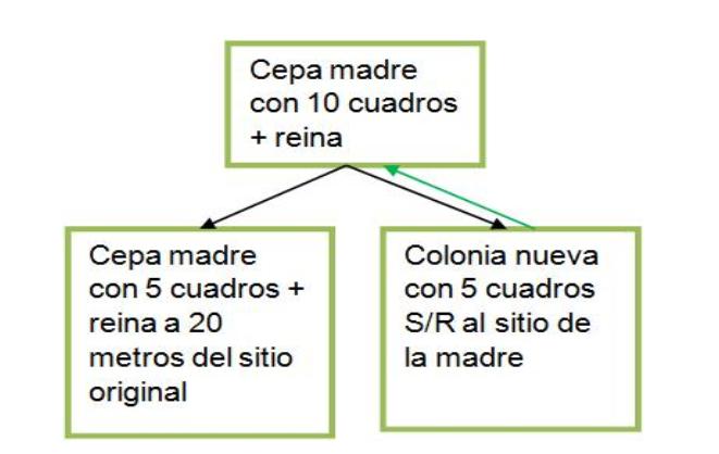 DIVISIONES EN LA COLMENA | DIVISIÓN DE DOS | De Mieles y Abejas