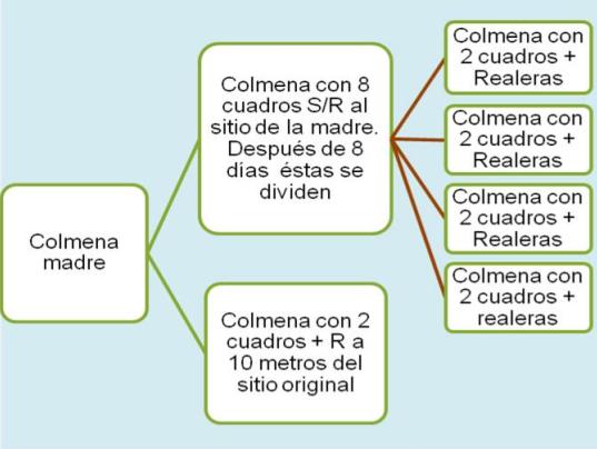 DIVISIONES EN LA COLMENA | MÉTODO DE ABANICO | De Mieles y Abejas