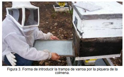 DIAGNÓSTICO DE LA VARROA | Caída natural de Varroa destructor