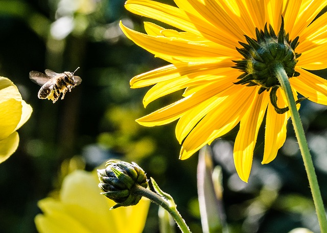 Las abejas pueden contar usando solamente cuatro células del cerebro.
