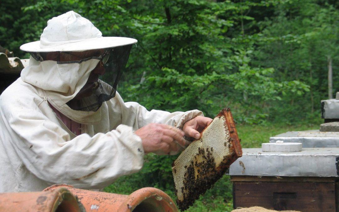 ¿Cómo iniciar en la apicultura? [Parte 1]