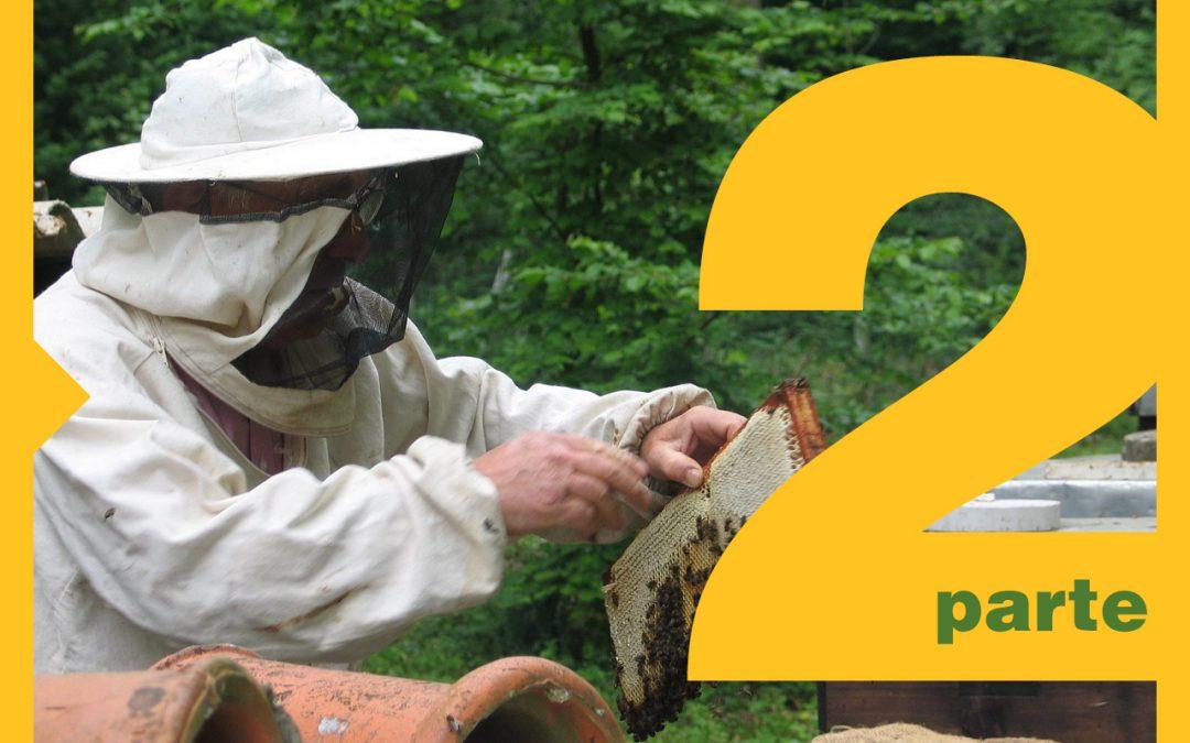¿Cómo iniciar en la apicultura? [Parte 2] Equipos y Herramientas