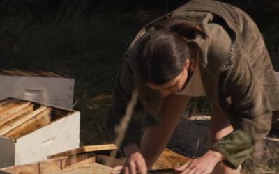 """Un mundo sin abejas, la nueva película """"IO"""" nos brinda una mirada al futuro."""
