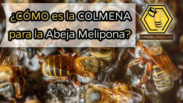 ¿CÓMO es la COLMENA para la Abeja Melipona?