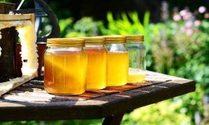 claves para aumentar la producción de miel