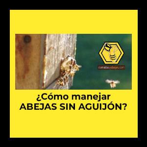 ¿Cómo manejar abejas sin aguijón?