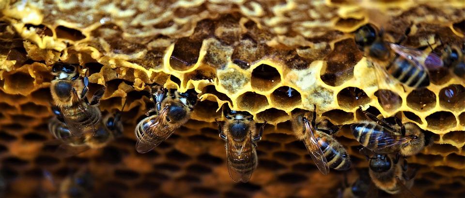 ¿Cuál será el futuro de la apicultura?