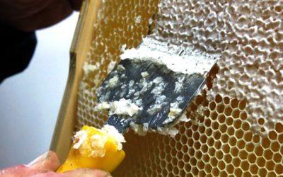 ¿Cuánto te cuesta ser apicultor?