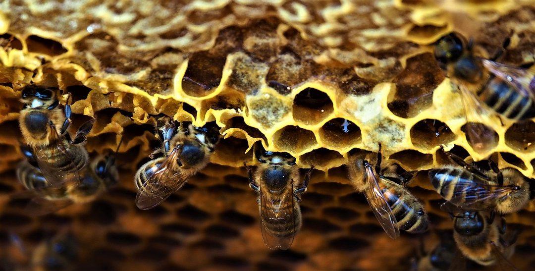El futuro de la apicultura – OJO